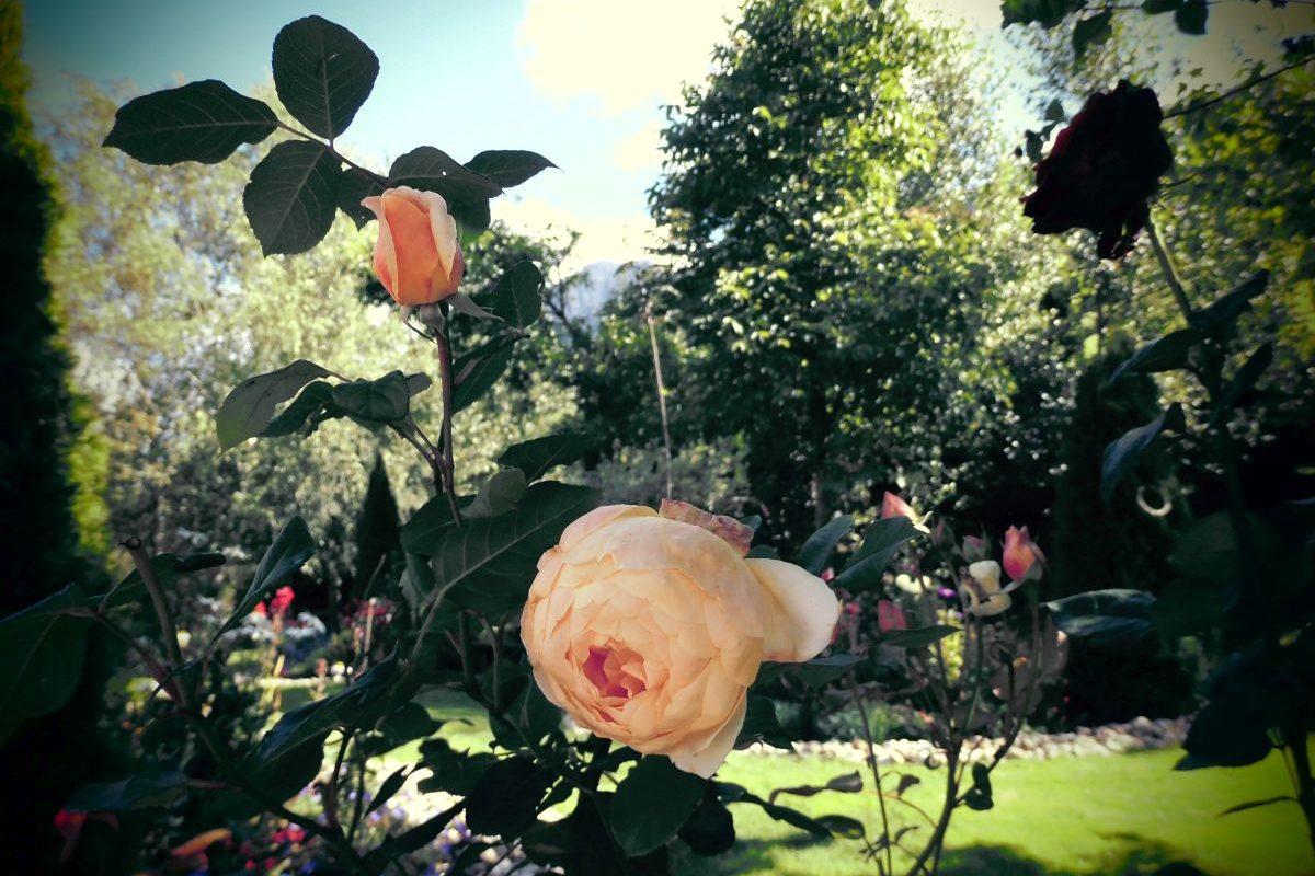 Rose Hotel Belvedere